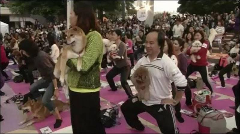 136 جاپانیوں نے پالتو کتوں کے ساتھ یوگا کا ریکارڈ بنا دیا