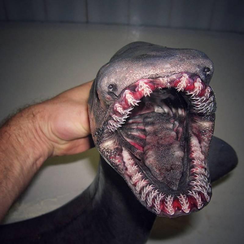 سمندرکی عجیب و غریب اور حیرت انگیز مخلوقات کی تصویری جھلکیاں