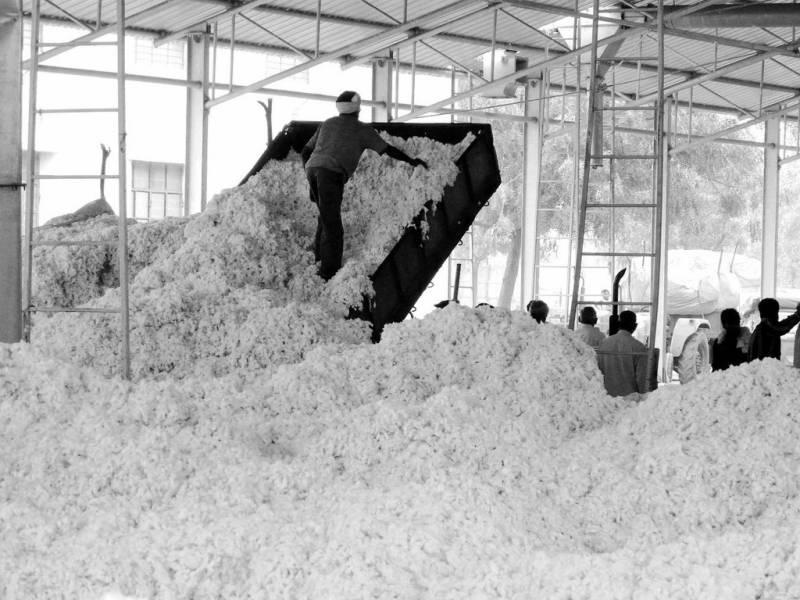 جننگ فیکٹریوں میں ایک کروڑ تین لاکھ گانٹھوں سے زائد کپاس کی آمد