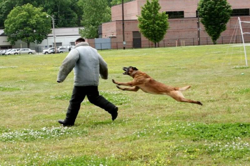 اگر کتا حملہ کر دے تو کیا کرنا چاہیئے؟