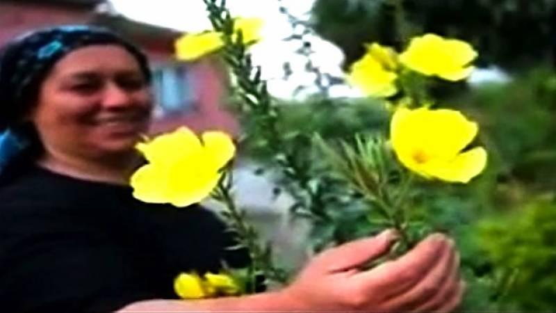 آذربائیجان: انوکھا پھول جو اذان کی آواز سن کر کھل اُٹھتا ہے
