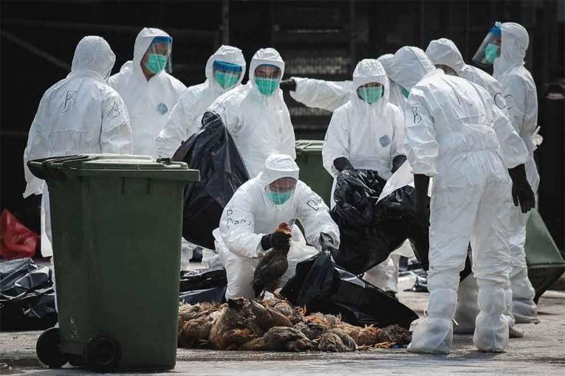 فرانس میں برڈ فلو سے 33 لاکھ مرغیاں اور پرندے ہلاک