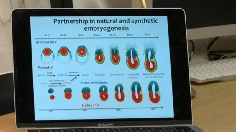 سائنسدانوں نے مصنوعی ایمبریو تیار کر لیا