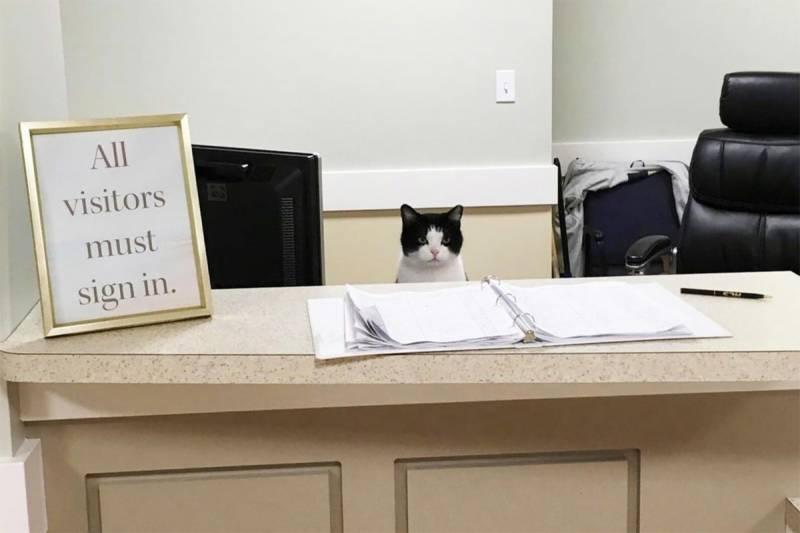 نرسنگ ہوم میں ملازمت کرنے والی بلی