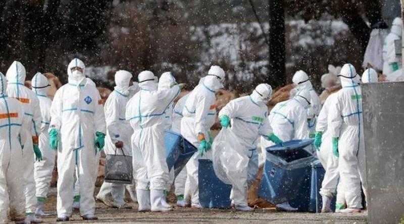 تائیوان میں برڈ فلو کی نئی وبا