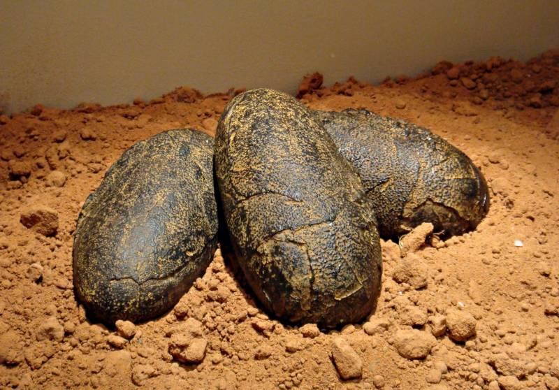ڈائنا سارز کی دنیا کی آخری نشانی،7 کروڑ سال بعد سامنے آگئی
