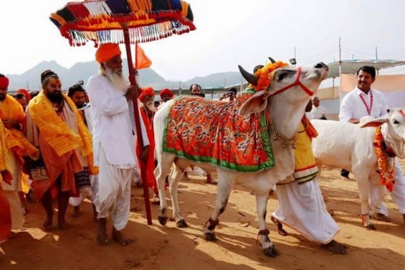 بھارتی سرکار نے گائے کو قومی شناخت دینے کا فیصلہ کر لیا