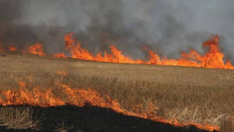 فیصل آباد :زرعی یونیورسٹی میں آگ لگنے سے کئی ایکڑ اراضی پر گندم جل گئی