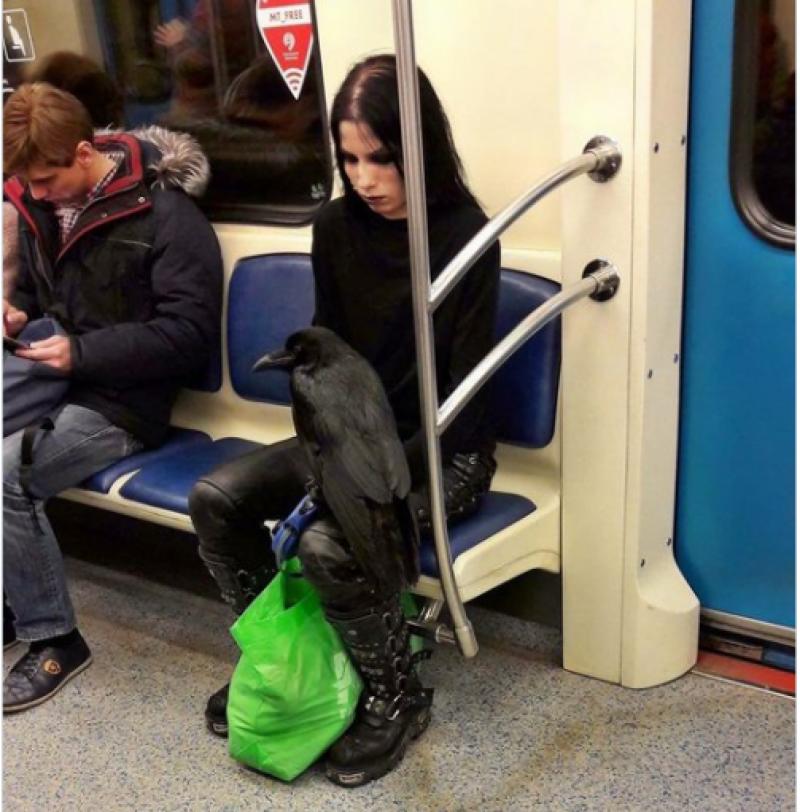 میٹرو ٹرین میں سیٹ حاصل کرنے کے لیے خاتون اپنا پالتو
