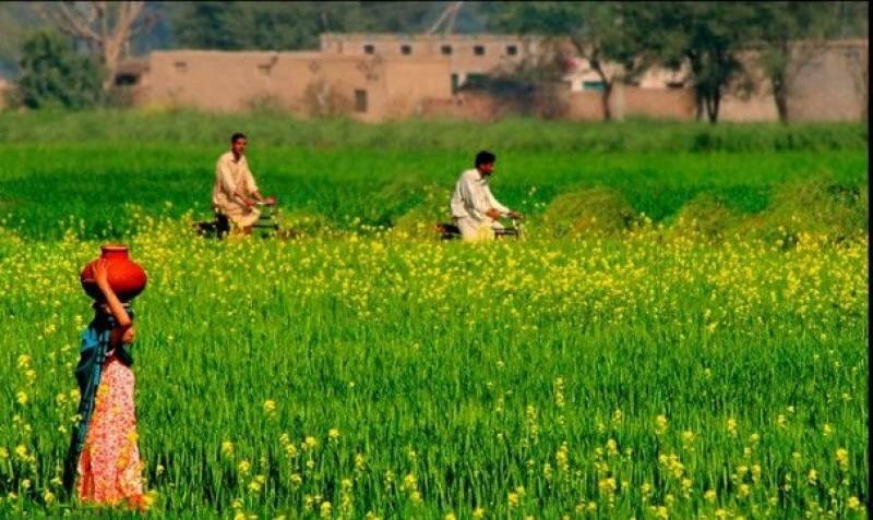 پنجاب میں زرعی زمینوں پر عائدٹیکس سٹرکچر میں تبدیلیوں کا فیصلہ