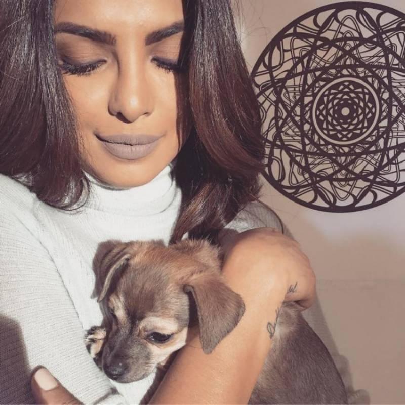پریانکا چوپڑا نے اپنے کتے ڈیانا کے ساتھ تازہ سیلفی انسٹاگرام پر شیئر کر دی