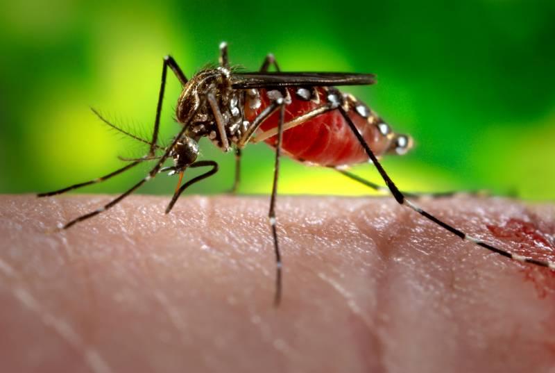 مچھر انسانیت کے لیے عالمی جنگ سے زیادہ بڑا خطرہ قرار