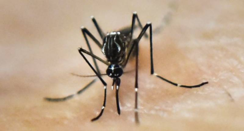 خیبر پختونخوا حکومت نے ڈینگی وائرس سے نمٹنے کے لئے پنجاب کا طبی تعاون مسترد کر دیا