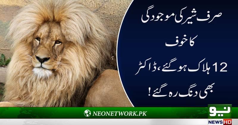 شیر کی موجودگی کا خوف،بھارتی بندروں کو دل کا جان لیوا دورہ،12ہلاک