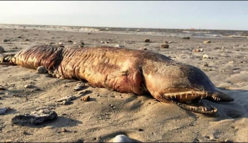 امریکہ میں عجیب و غریب سمندری مخلوق کا انکشاف
