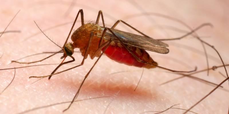 سائنسدانوں نے جنوب مشرقی ایشیا میں ملیریاپھیلنے کا خدشہ ظاہر کر دیا