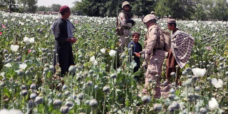افغانستان، پوست کی پیداوار میں 64 فیصد ریکارڈ اضافہ