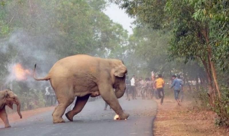آگ لگے ہاتھی سٹرکوں پر آ گئے،پورے بھارت میں کہرام مچ گیا