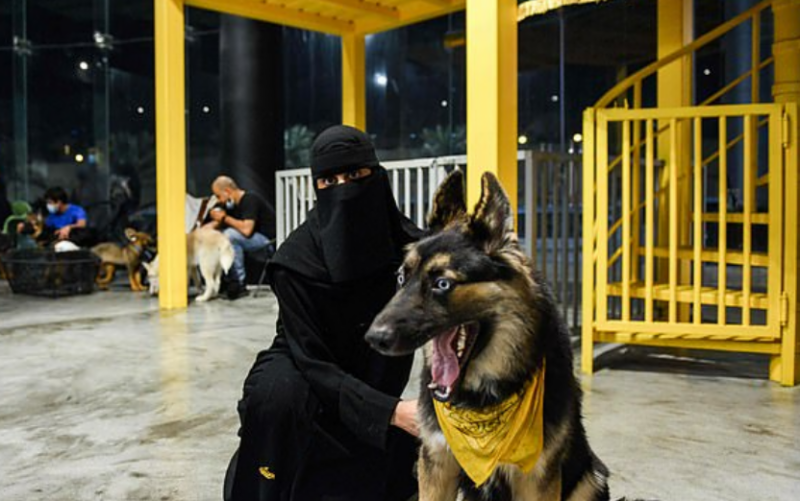 سعودی عرب میں کتو ں کیلئے کیفے