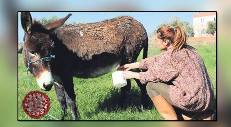 گدھی کے دودھ سے کورونا کا علاج