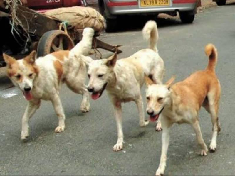 ماموں کانجن : آوارہ کتے کو ماری گئی گولی راہ گیر کو جالگی، شہری جاں بحق، کتا بچ نکلا