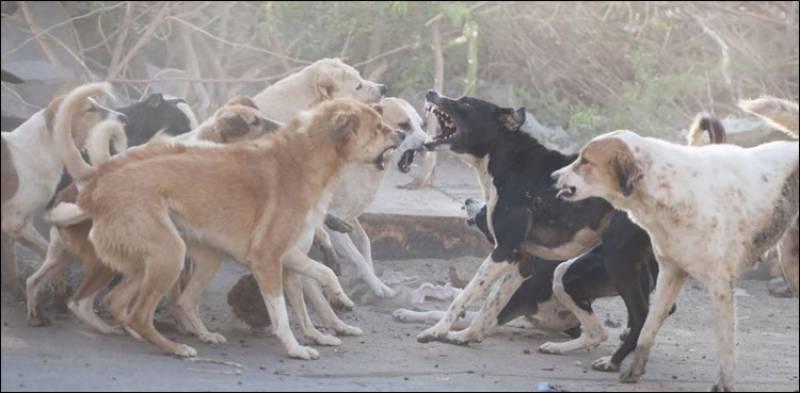 کتا مار مہم کی نگرانی نہ کرنے پر فریال تالپور اور گیان چند کی رکنیت معطل