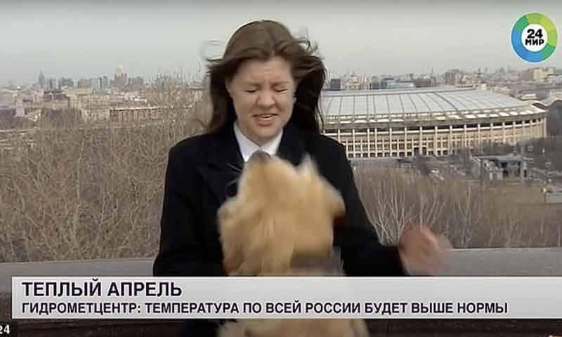 کتے نے صحافی کا مائیک چھین لیا