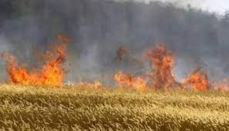 جھڈو کے نواحی گاؤں شرپسند عناصروں کھلیانوں میں پڑی 160 من گندم کو آگ لگادی