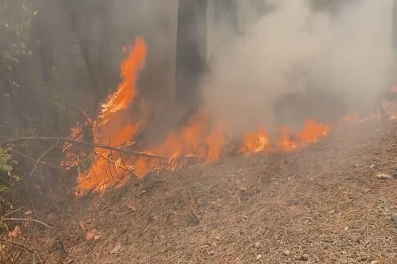کروڑ لعل عیسن کے جنگل میں اچانک آگ بھڑک اٹھنے سے لاکھوں روپے کے درخت جل کر راکھ