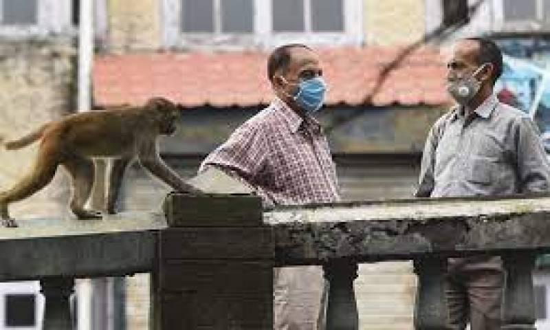 بھارت کے انوکھے جیب کترے بندروں نےشہریوں کو پریشان کردیا
