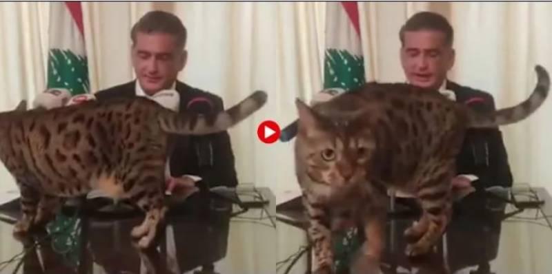 لبنانی سیاستدان کی پریس کانفرنس میں بلی کی اچانک انٹری