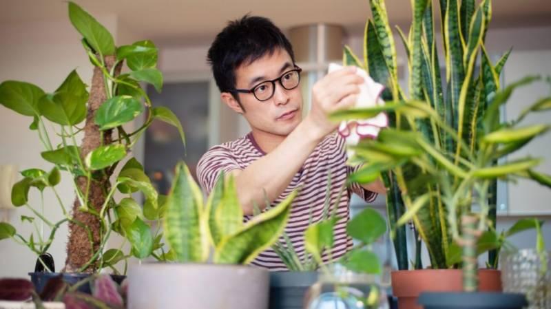 پودے ایک دوسرے سے بات کرتے ہیں، ماہرین