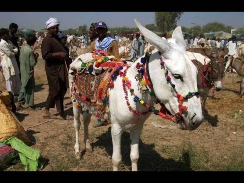 پاکستان میں گدھوں کی تعداد بڑھ گئی