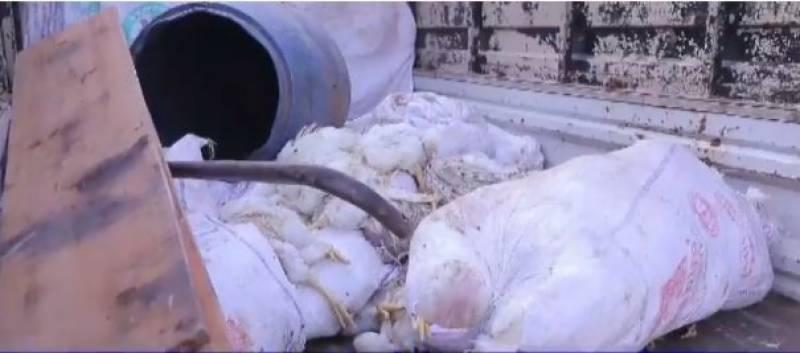 مردہ مرغیوں کا گوشت کھلانے والے دوافراد گرفتار