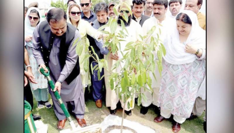 PTI government, Plant for Punjab Day, Prime Minister, Imran Khan, Billion Tree Tsunami Program