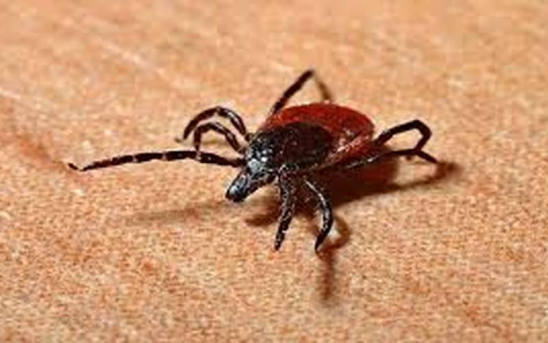 بلوچستان میں کانگو وائرس کے 5 نئے مریض سامنے آ گئے