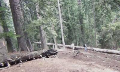 جنگل کے تنازعے پر فریقین کی ایک دوسرے پر فائرنگ، ایک شخص جاں بحق