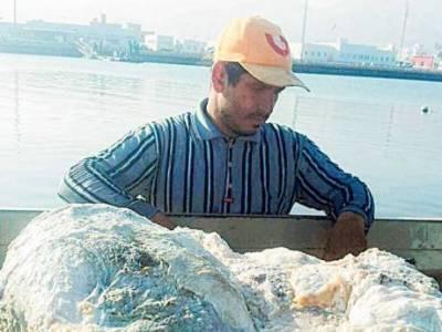 وہیل مچھلی کی قے نے مچھیرے کو کروڑ پتی بنا دیا