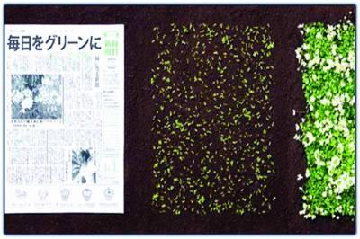 جاپان میں پودے اگانے والا اخبار تیار کر لیا گیا