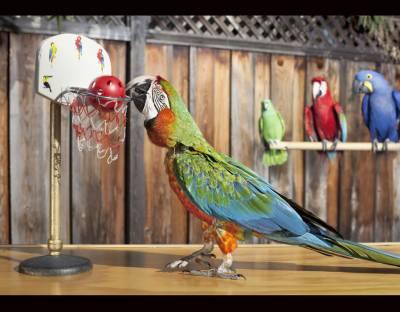 پرندے بھی عالمی مقابلوں کی دوڑ میں شامل ،طوطے نے عالمی ریکارڈ بنا دیا