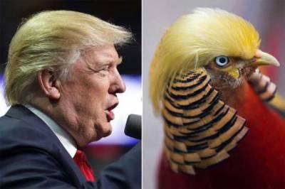 چین میں ڈونلڈ ٹرمپ کے ہم شکل پرندے کی دھوم