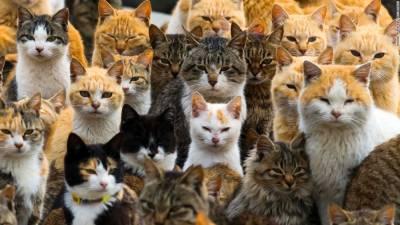 چودہ پالتو بلیاں ہلاک، خاتون کو سزا,بلیوں نے کھانا پینا نہ ملنے اور بھوک کے باعث ایک دوسرے کو حملہ کر کے ہلاک کرکے خوراک کی کمی کو پورا کیا۔