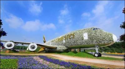 دبئی میں 5لاکھ پھولوں اور پودوں سے ہوائی جہاز کو سجا دیا گیا