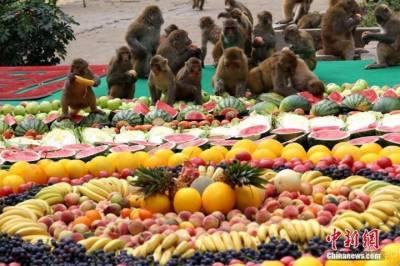 تھائی لینڈ میں بندروں کیلئے شاندار دعوت کا اہتمام
