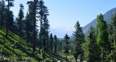 چترال میں جنگلات کی بے دریغ کٹائی کے خلاف احتجاجی مظاہرہ