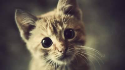 دنیا کی نایاب ترین بلی فروخت کے لیے پیش