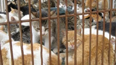 چین میں بلیوں کا گوشت بکنے لگا,انتظامہ خاموش