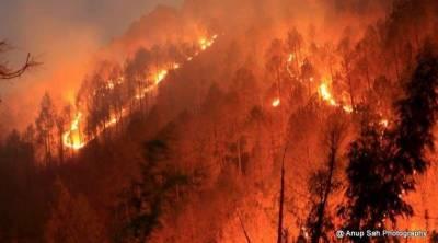 امریکی ریاست ٹینسی کے جنگلات میں بھیانک آگ، 7 افراد ہلاک ، ہزاروں افراد بے گھر