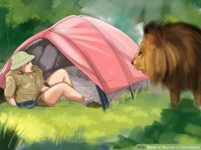 سرکس کے شیر نے اپنے نگران کو چیر پھاڑ ڈالا