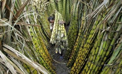 وزیر اعلی شہباز شریف کا گنے کے کاشتکاروں کو بروقت ادائیگیاں ہر قیمت پر یقینی بنانے کا حکم